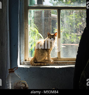 Red farm cat sitting in front of a old window on a sunny afternoon - Stock Photo