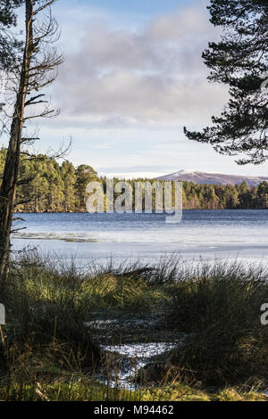 Loch Garten and Abernethy Forest in the Cairngorms National Park of Scotland. - Stock Photo