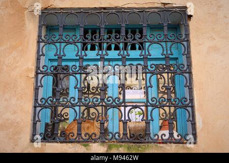 A ginger cat sits on a window sill behind a decorative metal scrollwork screen in the Andalusian Garden in Rabat, Morocco - Stock Photo