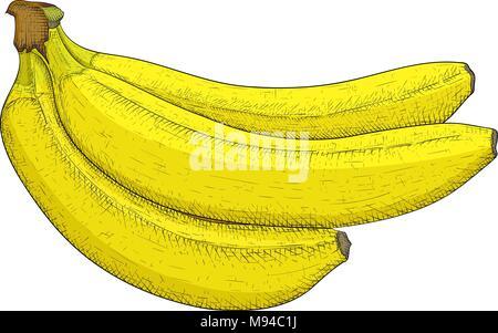Banana. Hand drawn colored sketch - Stock Photo