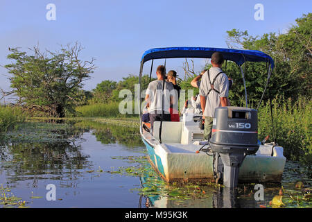 Tourists Enjoying An Early Morning Birdwatching Trip (spotting an Osprey) On The Lagoon At Crooked Tree Wildlife Sanctuary, Belize - Stock Photo