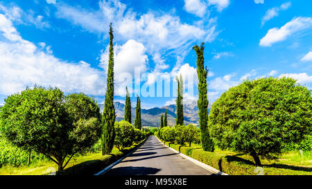 Straight Driveway through a Vineyard near Franschhoek in the Western Cape province of South Africa, with the Drakenstein Mountains in the background - Stock Photo