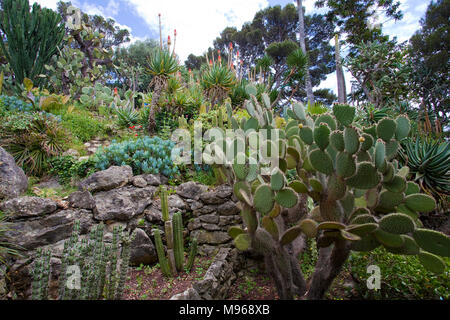 Cactus garden at Villa Ephrussi de Rothschild, Cape Ferrat, South France, Var, Cote Azur, France, Europe - Stock Photo