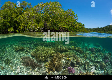 A split-level photo of a coral reef in clear tropical water next to a mangrove forest at Yangefo, Waigeo, Raja Ampat Marine Park, Indonesia. - Stock Photo