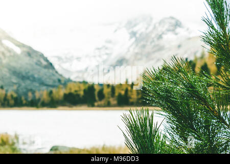 Green branches of conifer on the background of a mountain lake. Water surface through the branches of a tree. - Stock Photo