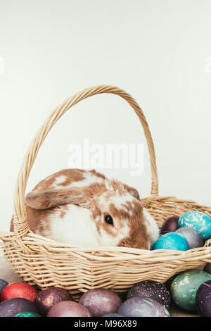 domestic rabbit lying in straw basket with painted easter eggs isolated on white