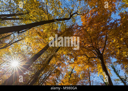Germany, Bavaria, Munich, Deciduous trees in autumn - Stock Photo