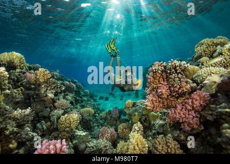 Egypt, Red Sea, Hurghada, teenage girl snorkeling at coral reef - Stock Photo
