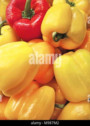 Sweet bell pepper - Stock Photo