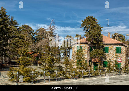 Black pine trees in spring on the road from troodos square to mount olympus, limassol district, cyprus, europe - Stock Photo