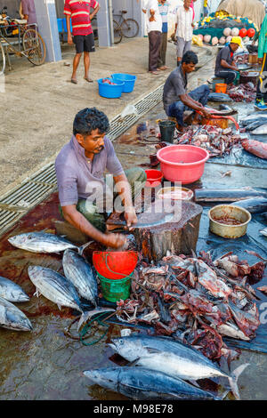 Large freshly caught fish being prepared by local fishermen at the fish market quayside in the harbour at Weligama, Mirissa, south coast of Sri Lanka - Stock Photo