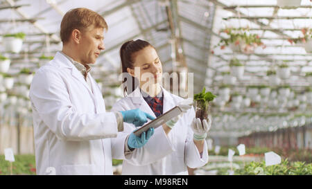 In the Industrial Greenhouse Two Agricultural Engineers Test Plants Health and Analyze Data with Tablet Computer. - Stock Photo