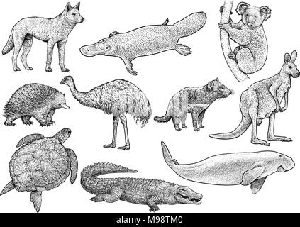 Australian animal collection illustration, drawing, engraving, ink, line art, vector - Stock Photo