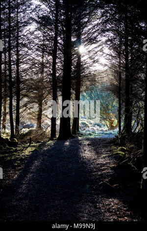 Evening Sunlight through the Trees falling on the Forest Trail - Stock Photo