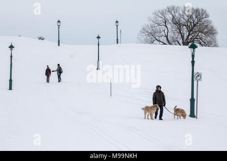 QUEBEC, CANADA - DECEMBER 26, 2016: Man walking a dog in the plains of Abraham (Plaines d'Abraham) under heavy snow during the Canadian winter.   Pict - Stock Photo