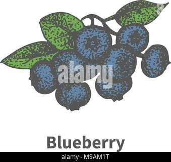 Vector hand-drawn bunch ripe blue blueberry - Stock Photo