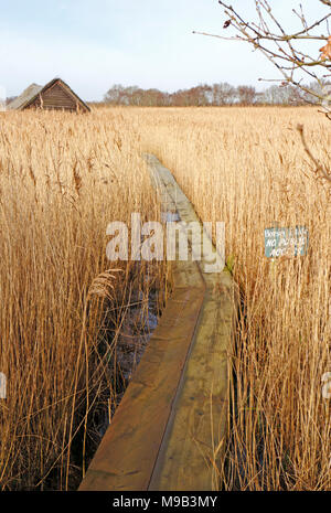 A boardwalk leading to a thatched boathouse at the edge of Horsey Mere on the Norfolk Broads at Horsey, Norfolk, England, United Kingdom, Europe. - Stock Photo