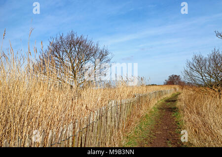A public footpath on a circular walk by Horsey Mere on the Norfolk Broads at Horsey, Norfolk, England, United Kingdom, Europe. - Stock Photo