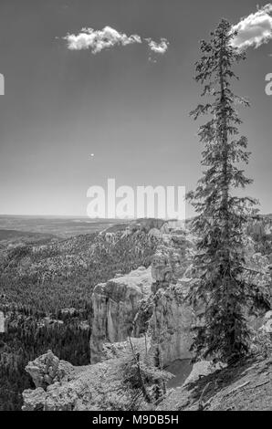 Tall pine trees beautiful view of sandstone cliffs and valley below under the sky. - Stock Photo