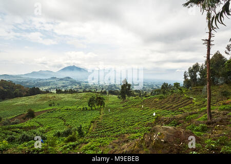 Green Landscape view in Virunga reserve, Rwanda - Stock Photo