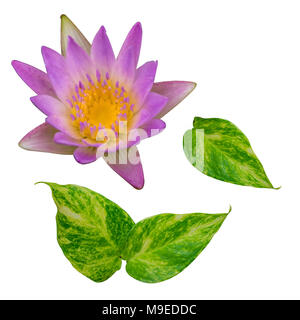 Green leaf and Pink lotus flower isolate on white background - Stock Photo