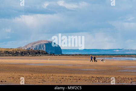 John Muir Country Park, Belhaven Bay, Dunbar, East Lothian, Scotland, United Kingdom, 25th March 2018. Spring sunshine on wide sandy beach with blue sky and puffy white clouds. People walking dogs on beach with the volcanic plug remnant of Bass Rock in the distance. Bass Rock is the largest Northern gannet colony in the world - Stock Photo