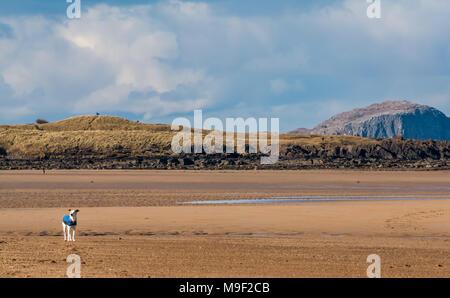 Dog Belhaven Beach