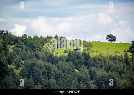 Beautiful green May Bulgarian mountain spring sunny landscape with loutlined single pine tree - Stock Photo