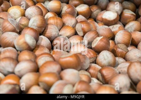 Pile of hazelnut close-up photo shallow depth of field. - Stock Photo