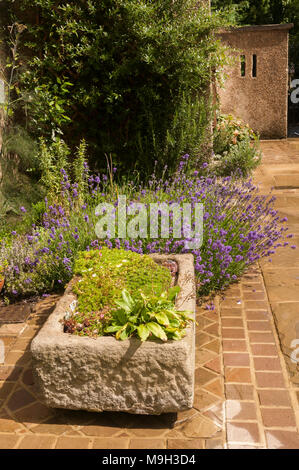 Close-up view of low stone planter on sunny stone-paved patio flowering plants on border beyond - private garden, West Yorkshire, England, UK. - Stock Photo