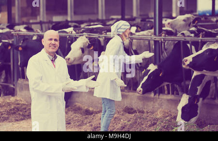 Professional vets working with cows in cowhouse outdoors