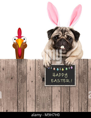 lovely pug dog with easter bunny ears diadem and chicken, with sign saying happy easter, isolated on white background - Stock Photo
