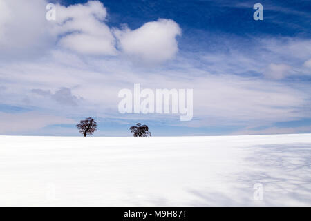 Oak trees in fresh snow near Dunsford,Dartmoor National Park,Teign Valley,community, district, neighbourhood, regional, city, town, municipal, provinc - Stock Photo