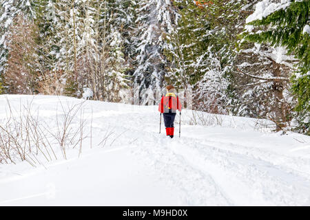 43,160.09802 Woman in red cross-country skiing a hiking trail in a snowy conifer forest - Stock Photo