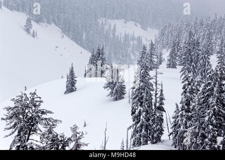 43,160.09810 Winter landscape conifer pine trees forest close-up snowy rolling Mt hills, in a snowstorm, snowing - Stock Photo