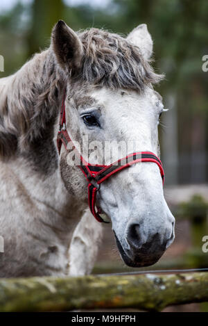 Portrait of a horse in the yard. White horse's head. - Stock Photo