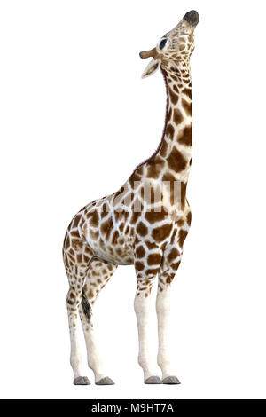 Beautiful Giraffe isolated on white, 3d render - Stock Photo