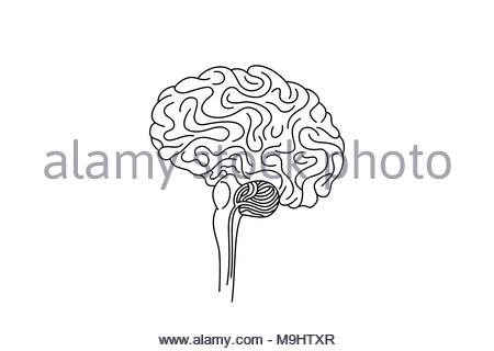 Drawing of  a brain stem, vector illustration. - Stock Photo