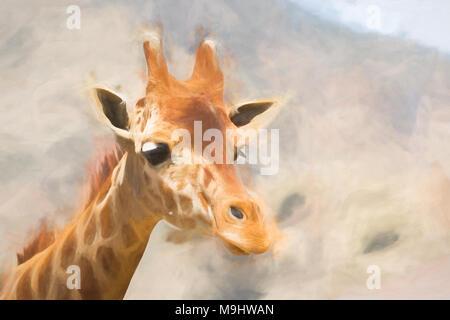 Reticulated or Somali Giraffe - Giraffa camelopardalis reticulata Captive Specimen. - Stock Photo