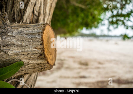 closeup of cut of a branch of a green and growing tree in a sandy area and lots of trees in a row in the background in cloudy weather - Stock Photo
