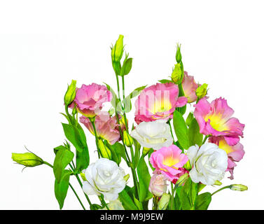 Bouquet of tender pink with yellow and white Eustoma (Lisianthus) flowers on a white background isolated - Stock Photo