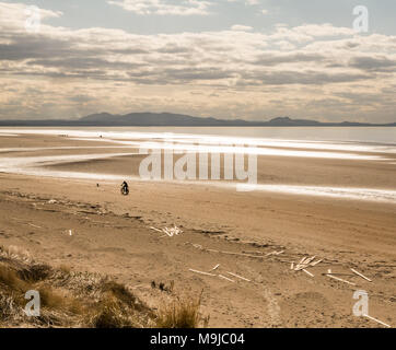 Aberlady Nature Reserve, Aberlady, East Lothian, Scotland, United Kingdom, 26th March 2018. Planks of timber lie washed up after spilling from a cargo vessel 'Frisian Lady' which lost the timber bundles during severe weather on 2nd March during the 'Beast from the East' stormy weather.  A man rides a bicycle along the beach - Stock Photo