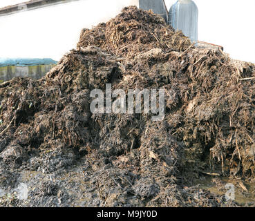 big heap of smelly manure to spread on the field to make it very fertile - Stock Photo