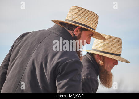 Amish auctioneers at a mud sale, Lancaster County, Pennsylvania, USA - Stock Photo
