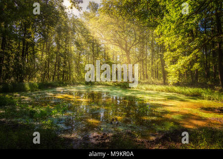 Wallow in the forest in a sunny day - Stock Photo