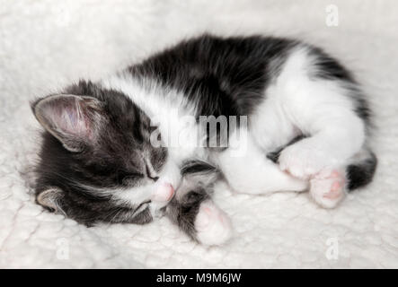 Close-up of a single tiny black and white kitten sleeping on a fluffy blanket - Stock Photo