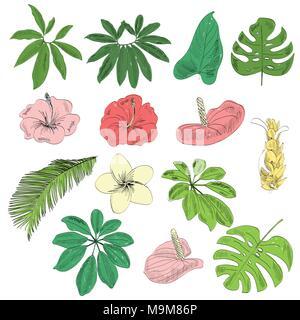 Tropical vector set - Stock Photo