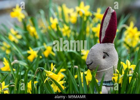 Toy rabbit sitting amongst daffodils, seasonal easter bunny. - Stock Photo