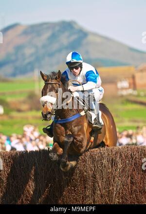 Eyton on Severn - Easter point to point - Stock Photo
