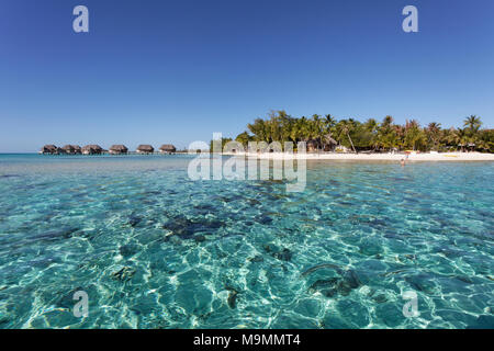 Bungalows, water bungalows in lagoon, Tikehau Pearl Beach Resort, Tikehau Atoll, Tuamotu Archipelago, Society Islands - Stock Photo